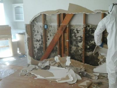 Interior wall Mold Removal